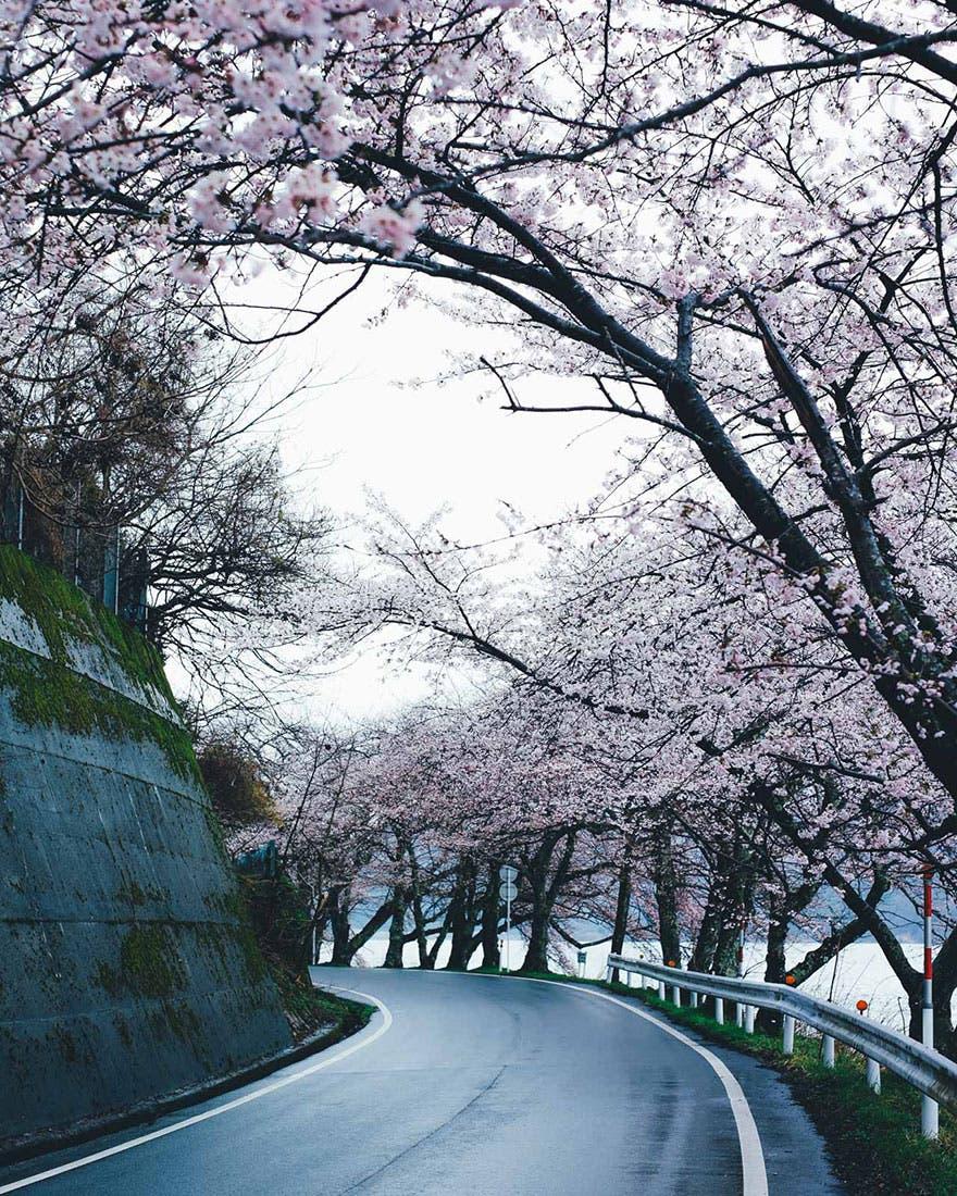 vida en japon 7