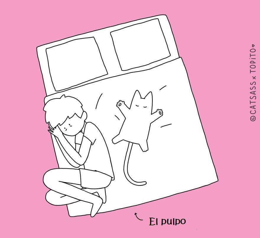 Las 10 posiciones que quienes duermen con su gato conocen muy bien… ¡Cuánta razón!