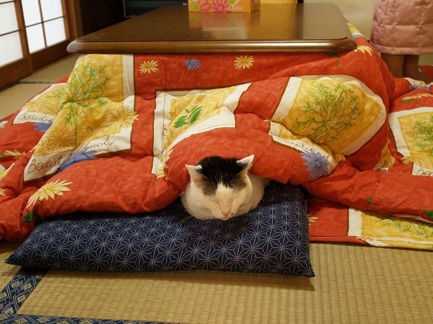 calentador de cama 8