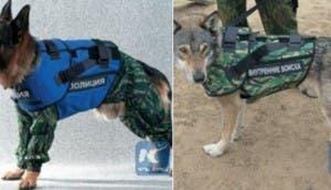 chaleco-antibalas-para-perros2 - copia