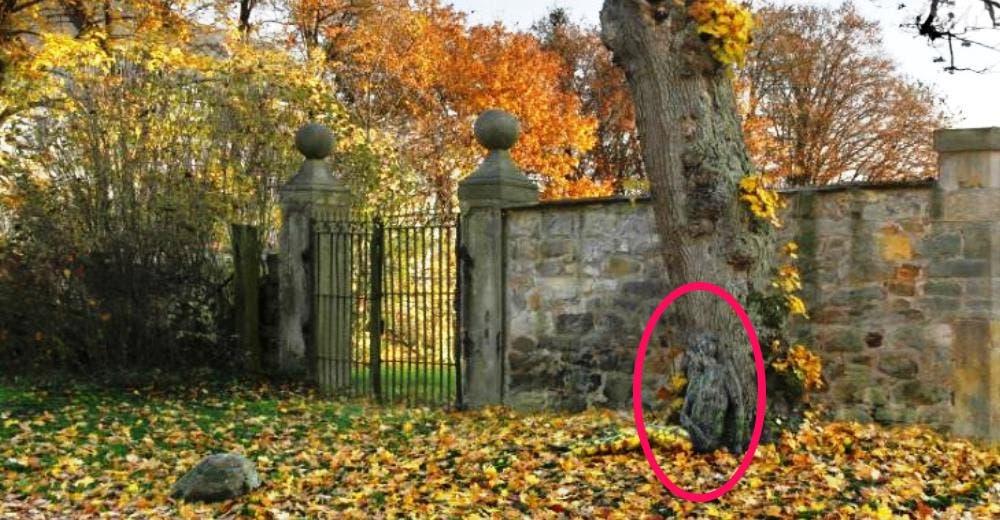 En esta foto se oculta una mujer completamente desnuda… ¿Eres capaz de encontrarla?