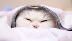 gato flojo 10