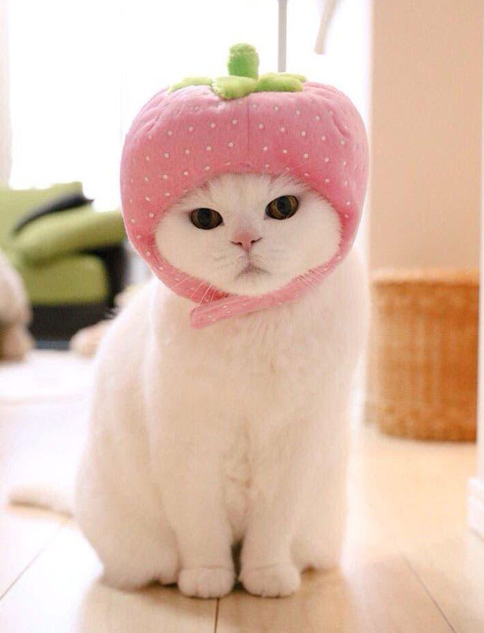 gato flojo 5