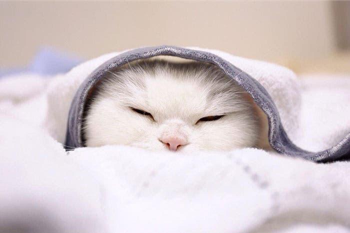 gato flojo 8