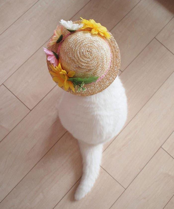gato flojo 9