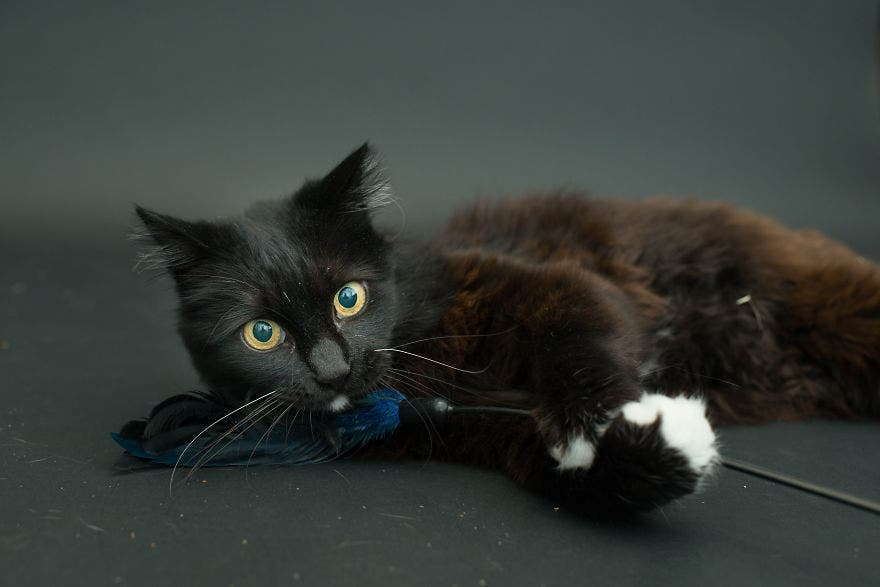 gatos negros adopcion 10