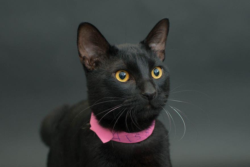 gatos negros adopcion 11