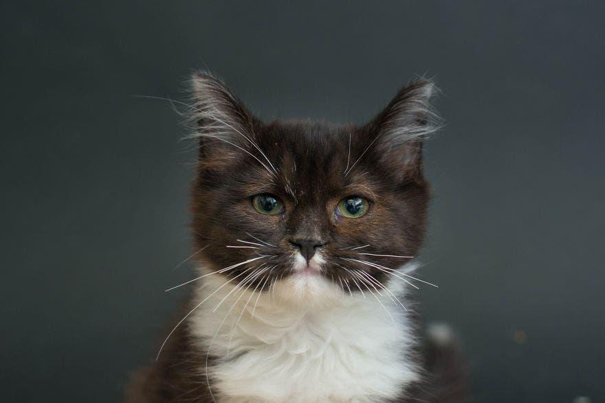 gatos negros adopcion 12