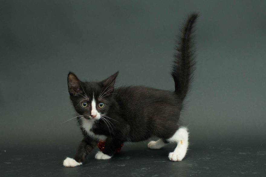 gatos negros adopcion 6