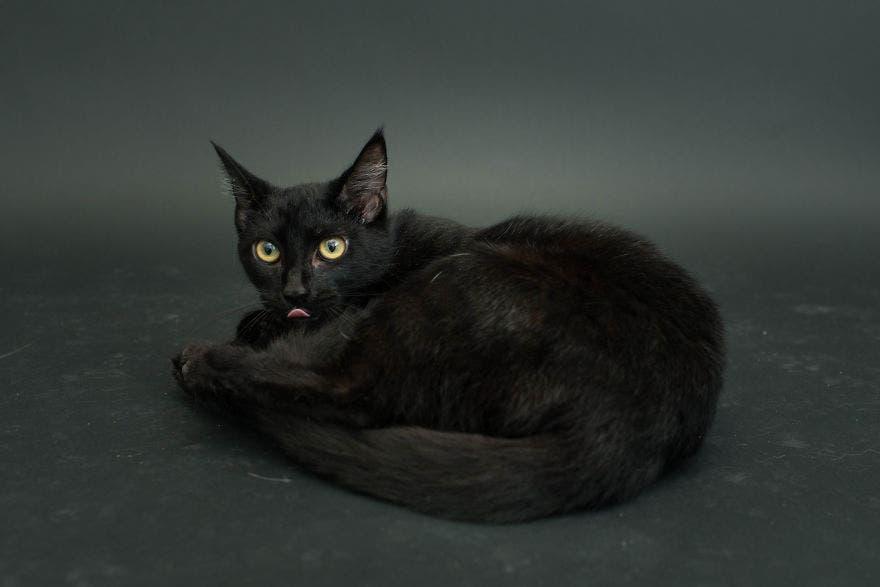 gatos negros adopcion 7