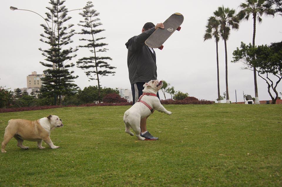 otto-bulldog-skate-gana-record-guiness2