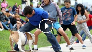 otto-bulldog-skate-gana-record-guiness4