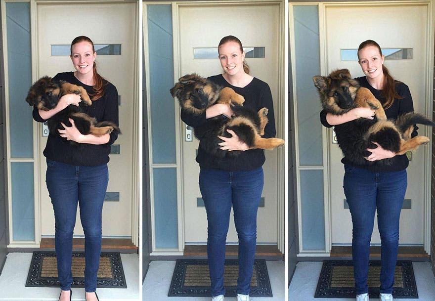 Una pareja documenta lo rápido que ha crecido su perro…