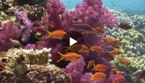 peces-video-acuario