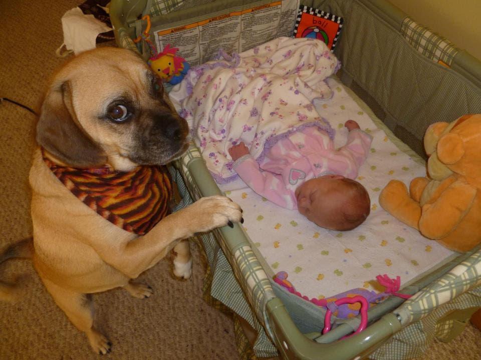 perritos-con-bebes-