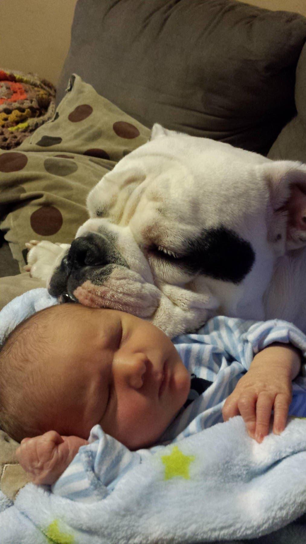 perritos-con-bebes-1