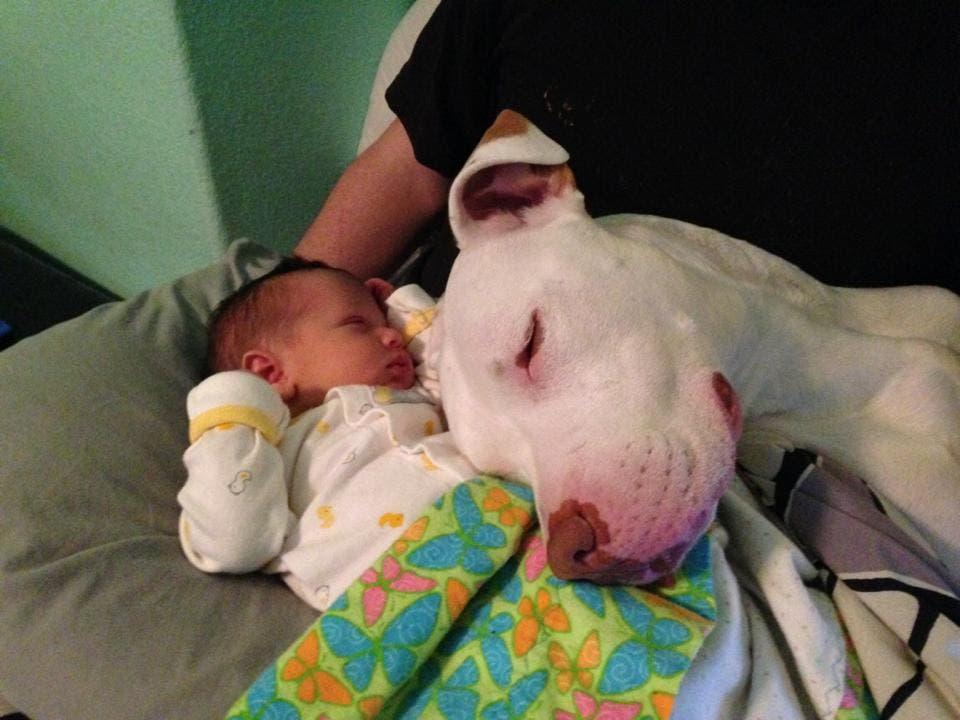 perritos-con-bebes-17