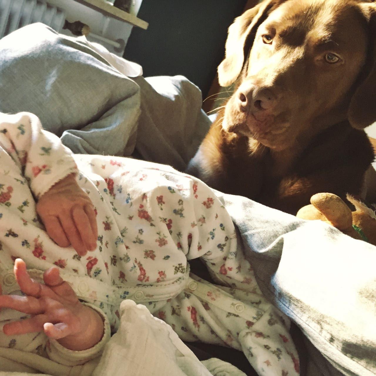 perritos-con-bebes-18