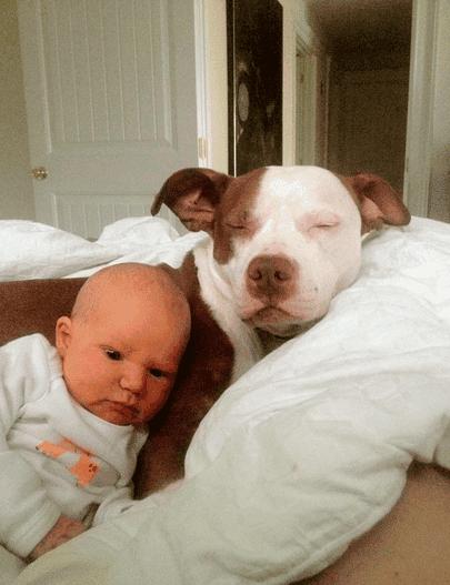 perritos-con-bebes-2
