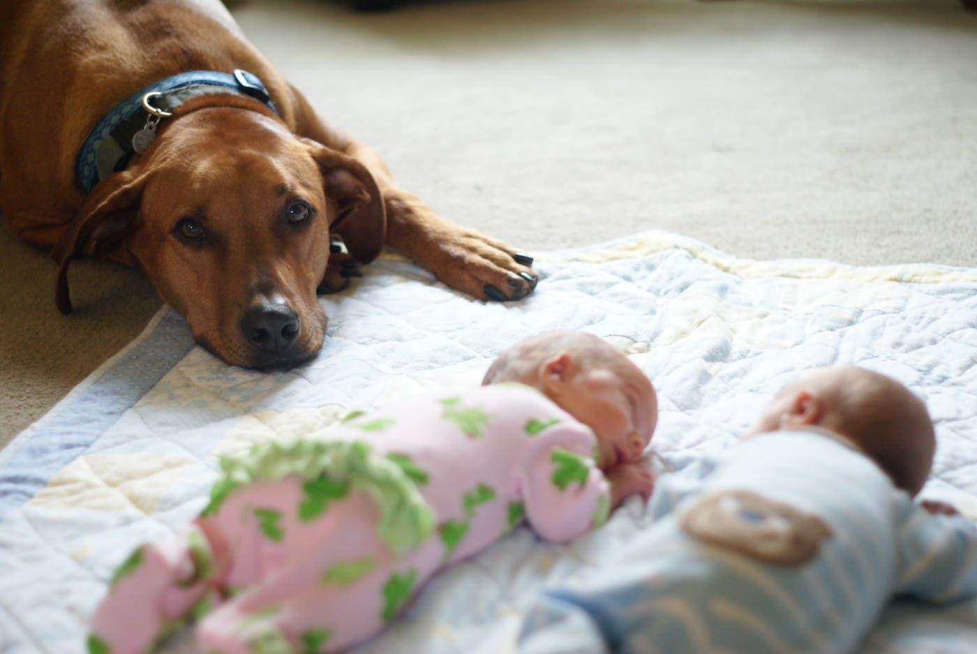 perritos-con-bebes-20