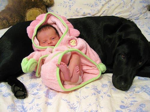 perritos-con-bebes-21