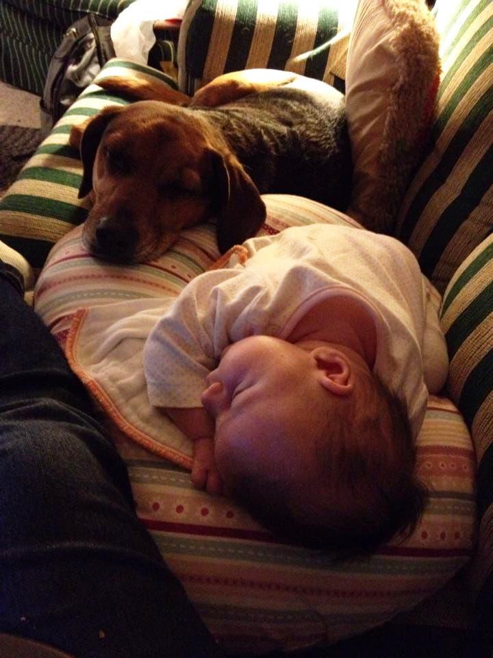 perritos-con-bebes-22