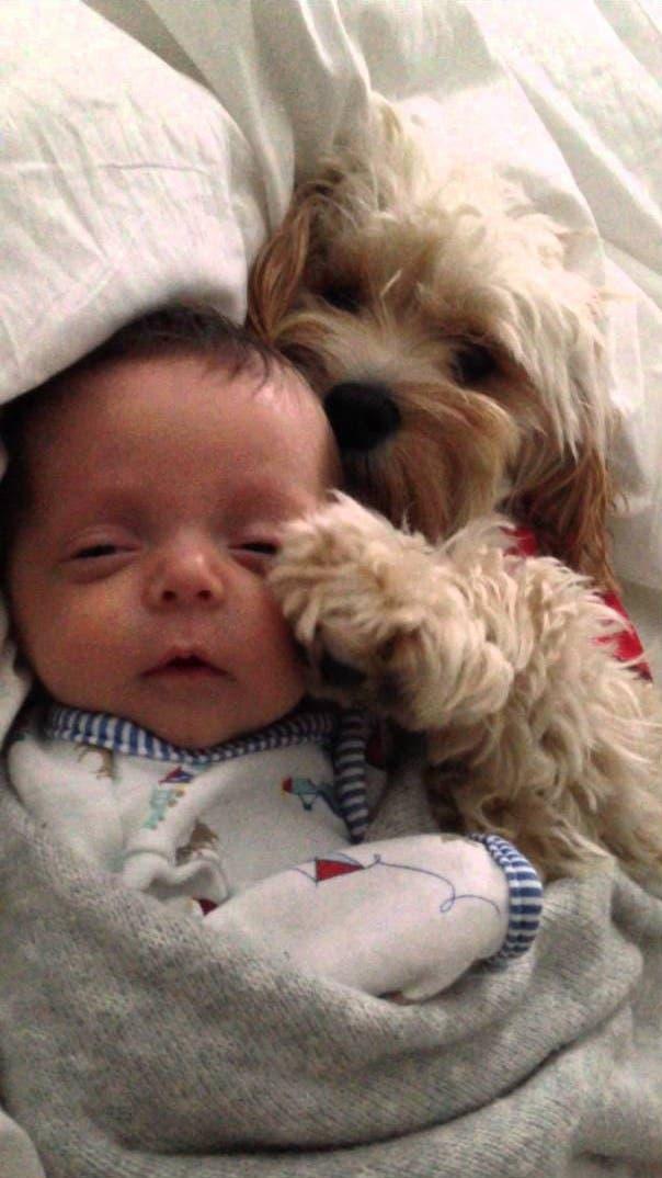 perritos-con-bebes-24