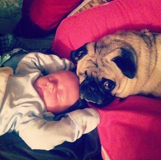 perritos-con-bebes-3