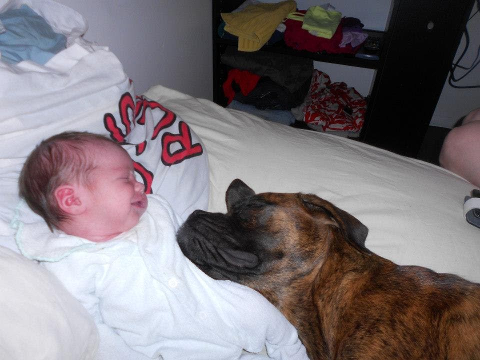 perritos-con-bebes-9