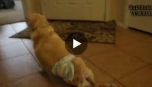 perro-adoptado-minusvalido