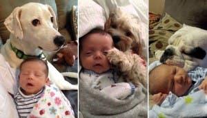 perros-bebes