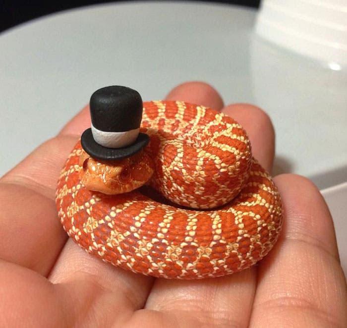 sombreros serpientes 1