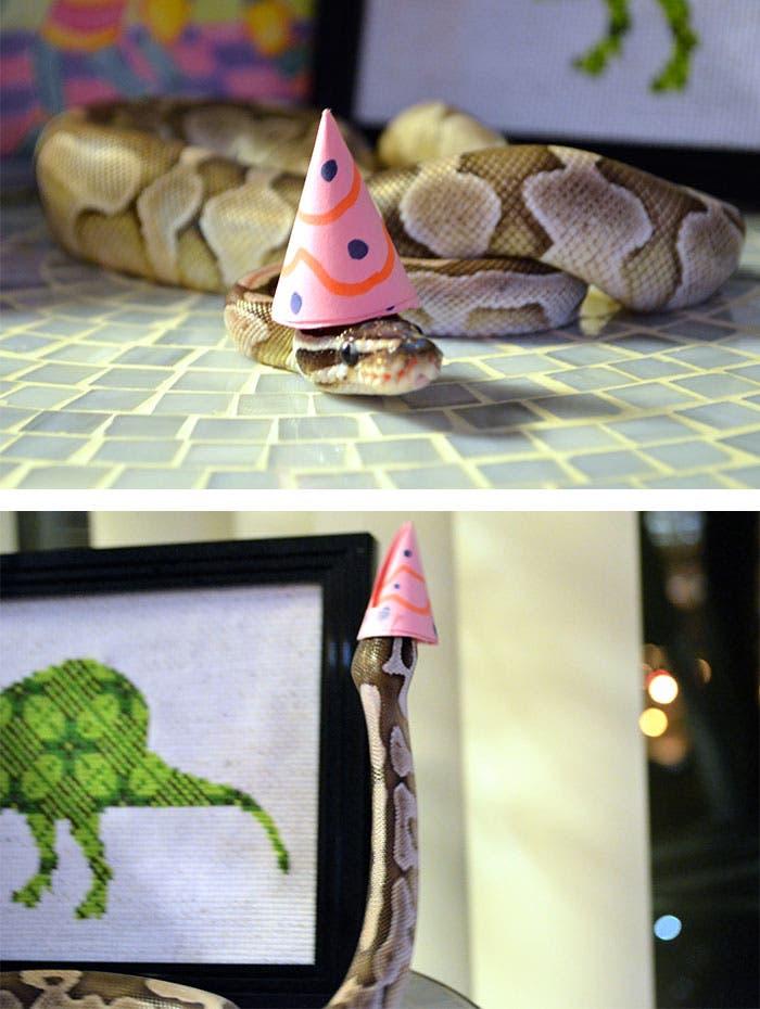 sombreros serpientes 13