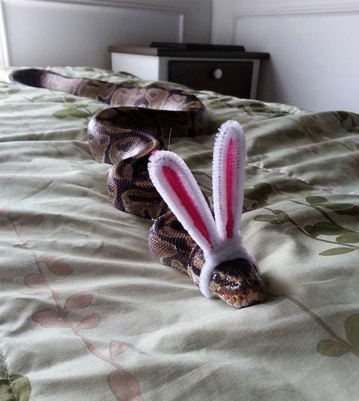 sombreros serpientes 3