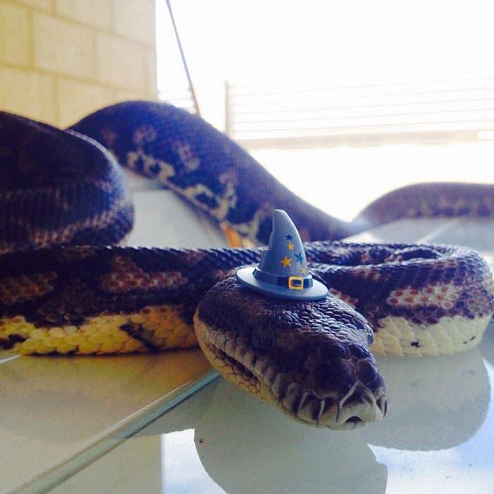 sombreros serpientes 5