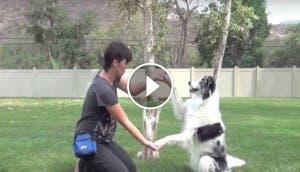 trio perros trucos