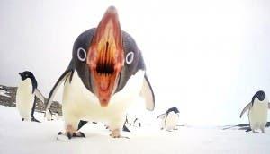 ataque-pinguino