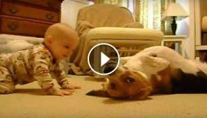 beagle y bebe id