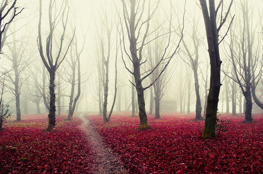 18 misteriosos bosques en los que no te importará perderte ¡El 11 parece de cuento de hadas!