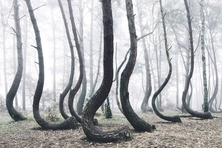 bosque misterioso 1
