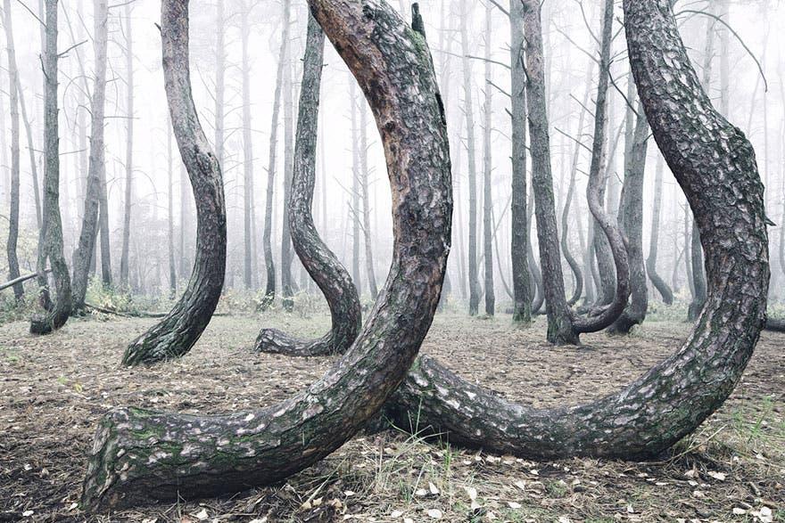 bosque misterioso 4