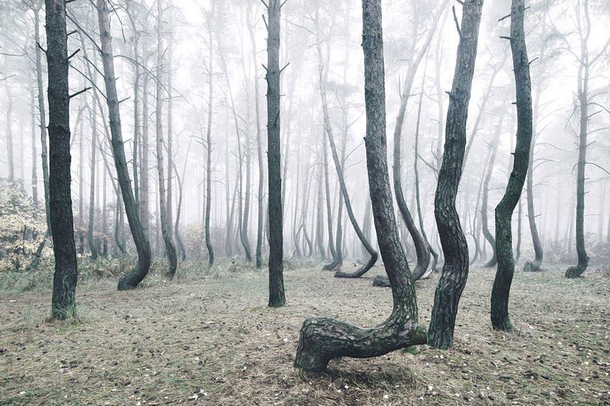 bosque misterioso 5