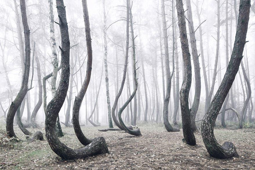 bosque misterioso 6