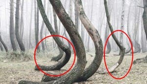 bosque misterioso 7