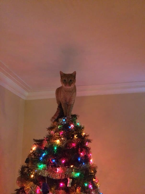 gatos-decorando-arbol-de-navidad1
