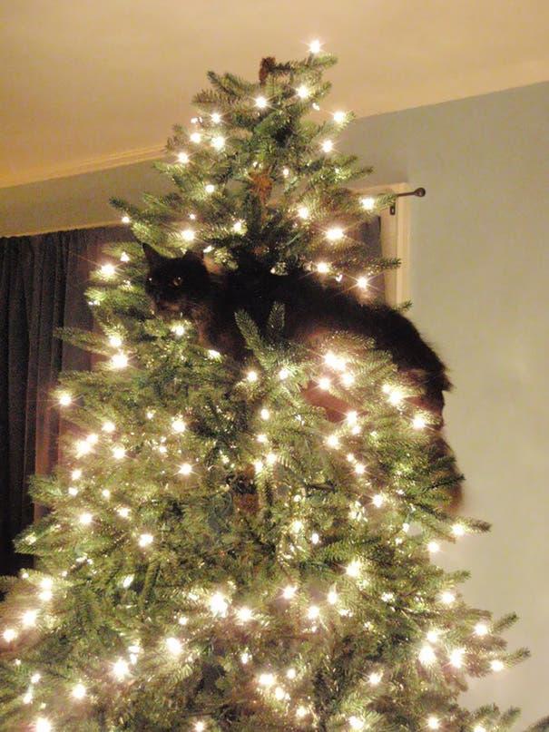 gatos-decorando-arbol-de-navidad12
