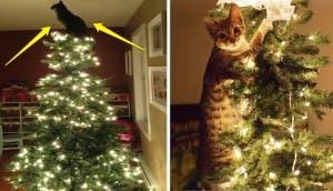 gatos-decorando-arbol-de-navidad122
