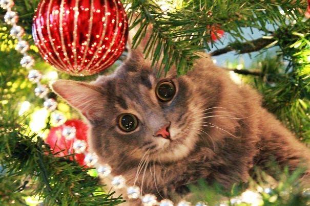gatos-decorando-arbol-de-navidad19