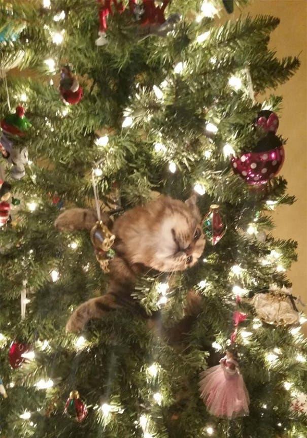 gatos-decorando-arbol-de-navidad4