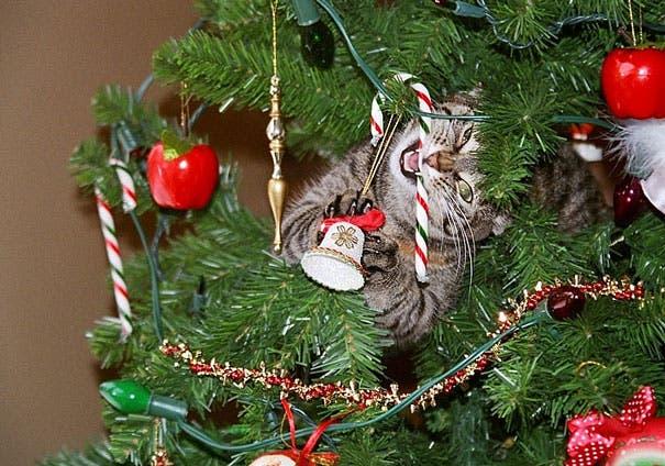 gatos-decorando-arbol-de-navidad8